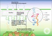 Grafik Funktion Biofilter